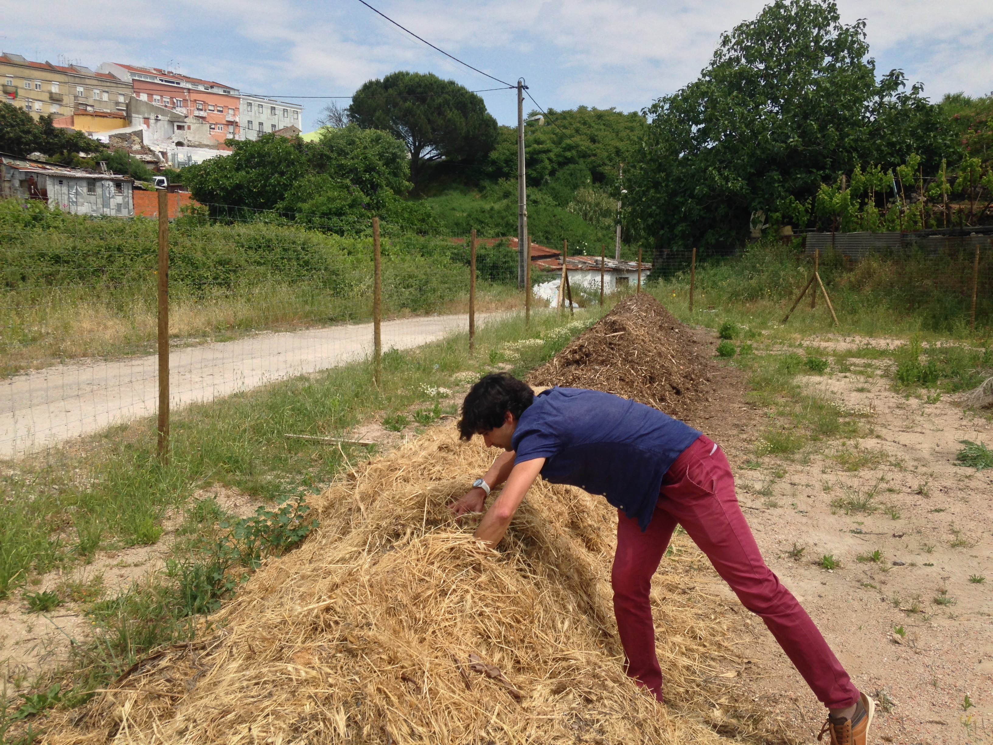 Community Gardens in Campolidein Lisbon, Bip/Zip project. Photo (cc) Eutropian